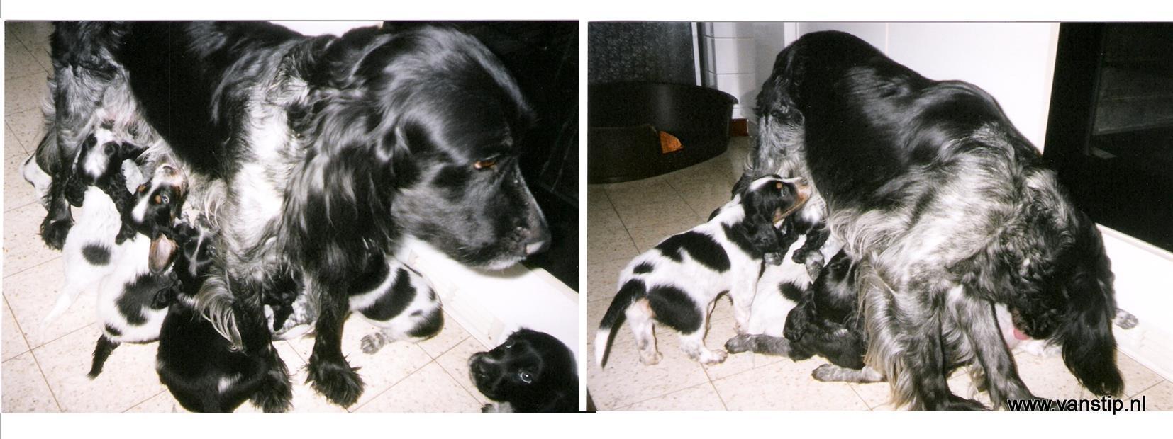 2004-april Nest Anke