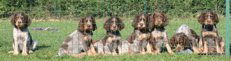 IMG_9709 pups Capry 7,5 week - uitsnede