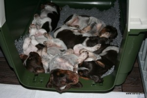 kennel-IMG_1359